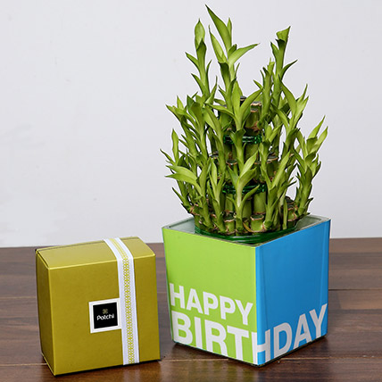 3 Layer Bamboo Plant and Patchi Chocolates For Birthday: One Hour Delivery Gifts