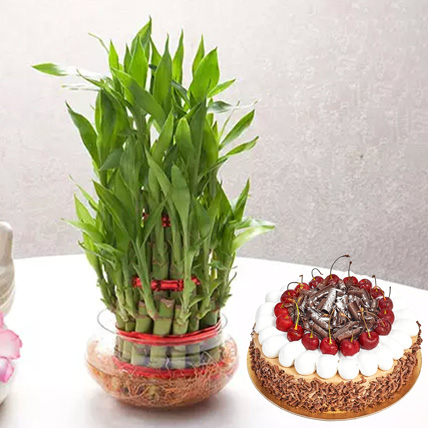 3 Layer Bamboo With Black Forest Cake: Black Forest Cakes