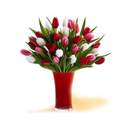 Innate Elegance: Tulips Flowers
