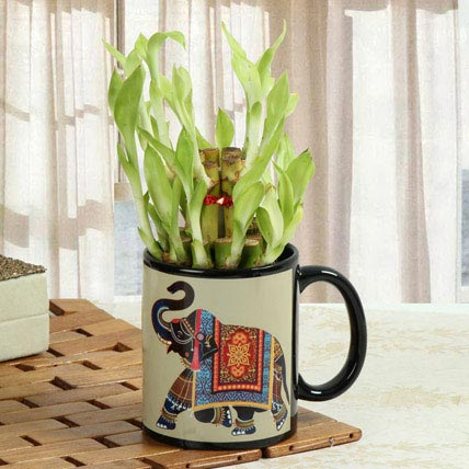 Lucky Bamboo In Printed Mug: Personalized Gifts