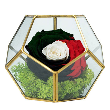 Marvellous Uae Flag Colored Rose: Flowers for National Day