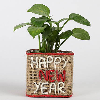 Money Plant In New Year Glass Vase: Money Plant