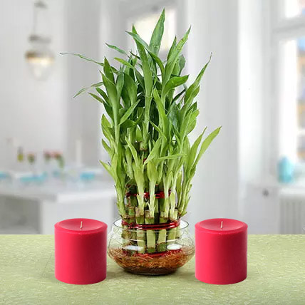 Three Layer Lucky Bamboo Plant N Candles: Indoor Plants