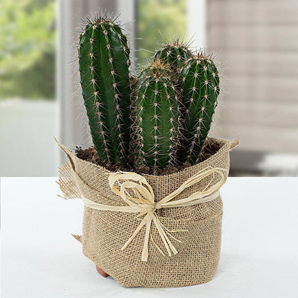 Cactus Jute Wrapped Potted Plant: Plants for Birthday Gift