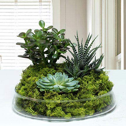 Small Glass Green Wonder: Dish Gardens