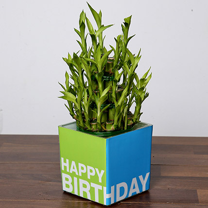 3 Layer Bamboo Plant For Birthday: Same Day Delivery Gifts