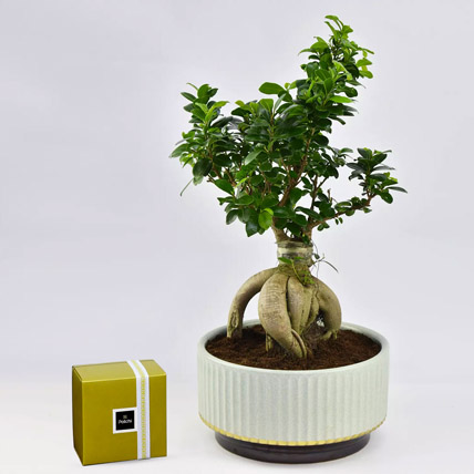 Bonsai Plant In Green Pot and Patchi Chocolates: Patchi Chocolate Dubai