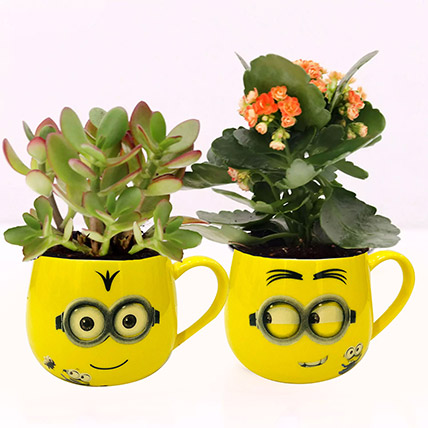 Crassula and Kalanchoe Plants in Emoticon Mugs: Plants for Anniversary