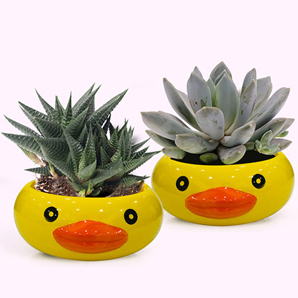 Frog Face Pots with Plants: Plants for Birthday Gift