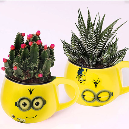 Cactus and Haworthia In Smiley Pots: Indoor Plants
