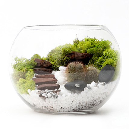 Cactus Amidst Moss & Mulch In A Fishbowl: