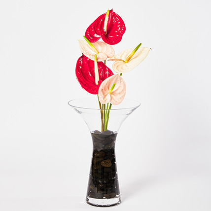 Mixed Anthuriums In Stones Filled Vase: Luxury Flowers Dubai