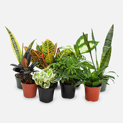 7 Beautiful Plants: Air Purifying Indoor Plants