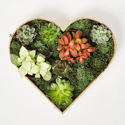 2 Fittonia & 6 Echeveria Plants In Heart Shape Wooden Base: