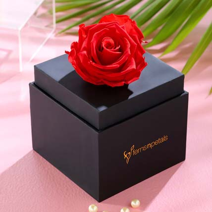 Single Forever Red Rose With Black Box for Valentines: Send Valentines Day Gifts to Singapore