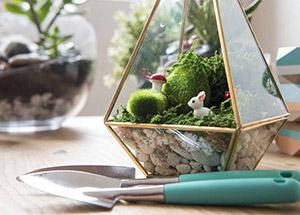 How to take care of Terrarium Plants?
