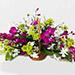 Elegant Basket Of Orchids